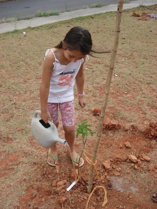 plantio dia da árvore - muda de jaracatiá