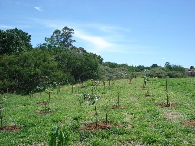 400 mudas nativas plantadas no Ribeirão do Chá.