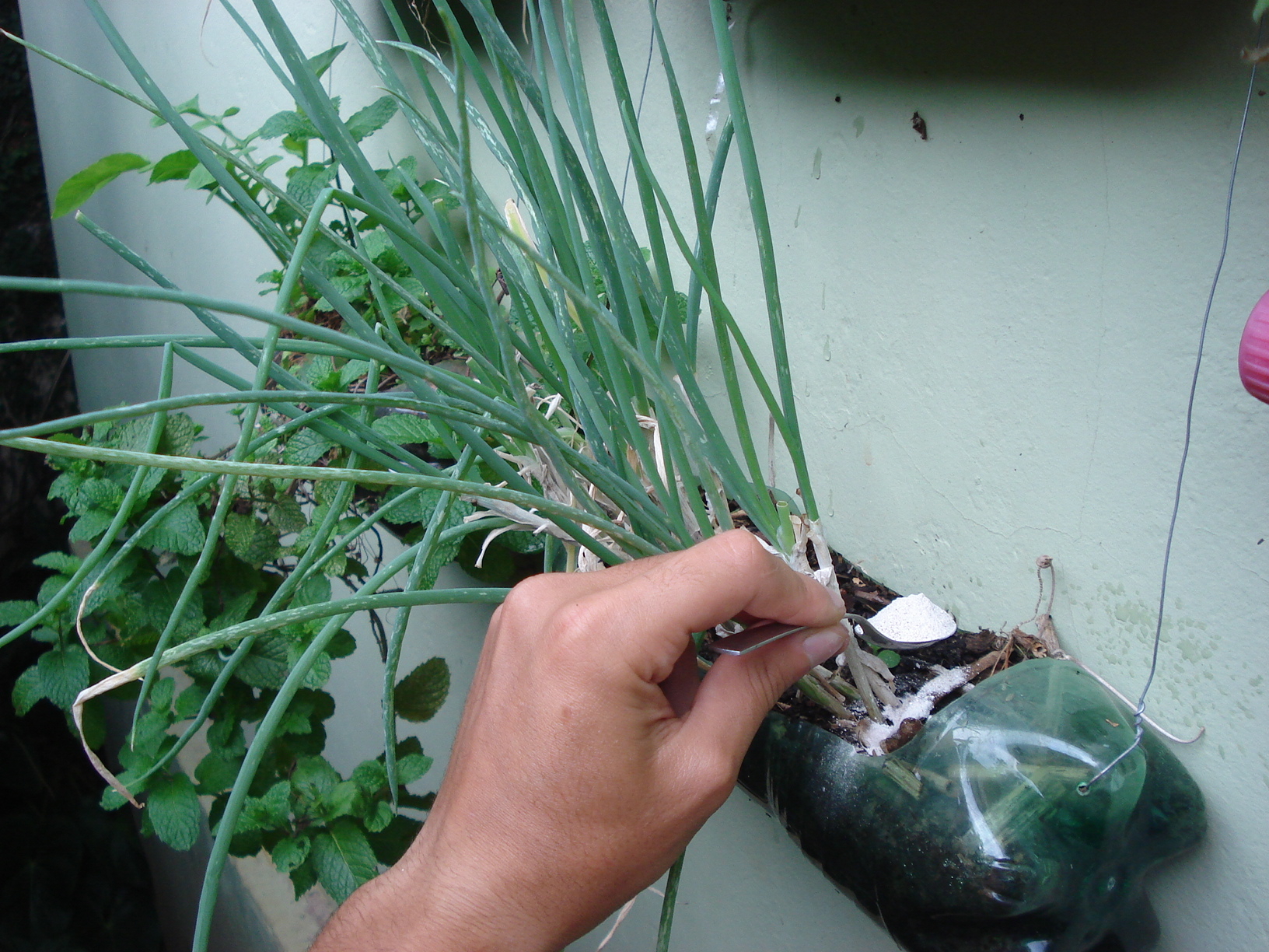 A farinha de ovo pode ser utilizada como adubo natural (fonte de cálcio) e como corretivo agrícola.