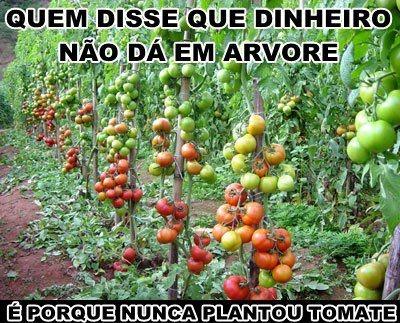 humor tomate