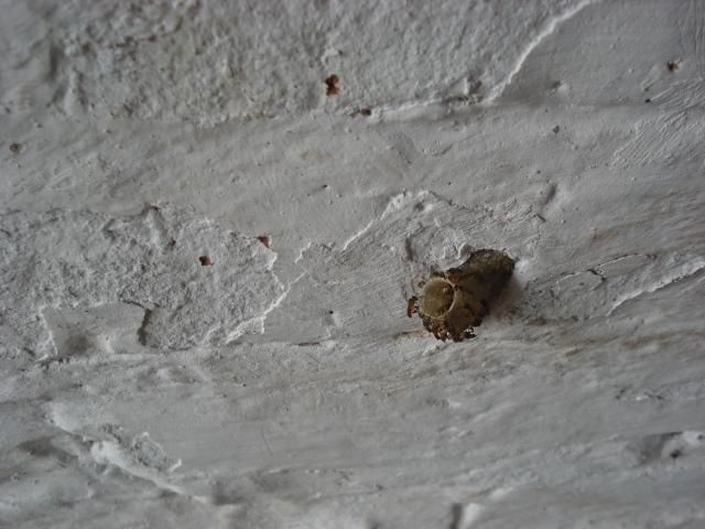 Entrada do ninho da jataí.