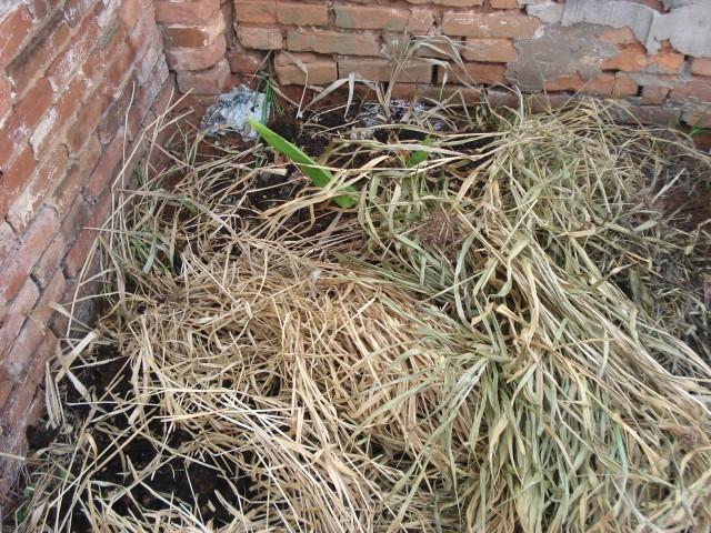 Proteção do solo com material vegetal seco.