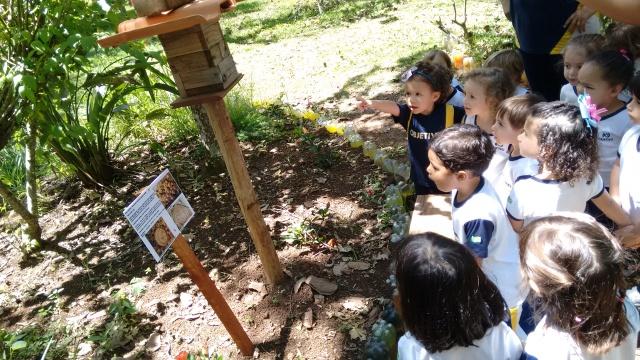 utilização de abelhas nativas como ferramenta na educação ambiental