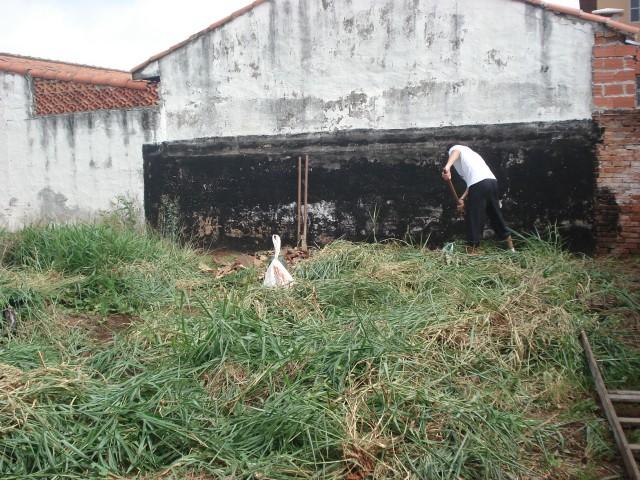 Controle do capim braquiária. O capim braquiária uma vez manejado torne-se uma ótima fonte matéria orgânica para o solo.