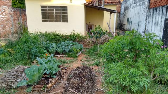 Vista geral do terreno com manejo agroecológico.