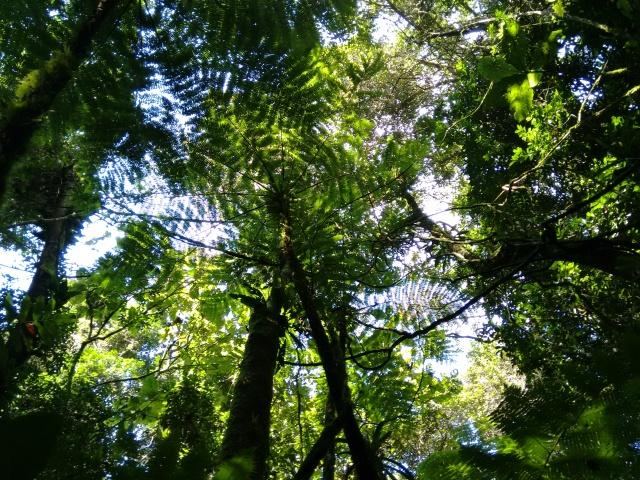 A imagem mostra as copas de diferentes espécies vegetais em um trecho de Mata Atlântica localizada no Parque Estadual Carlos Botelho. São Miguel Arcanjo - SP.