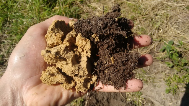 influência da matéria orgânica no solo