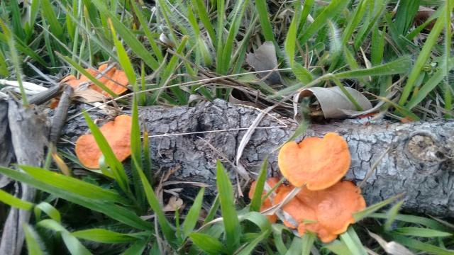 Fungos decompositores de madeira.