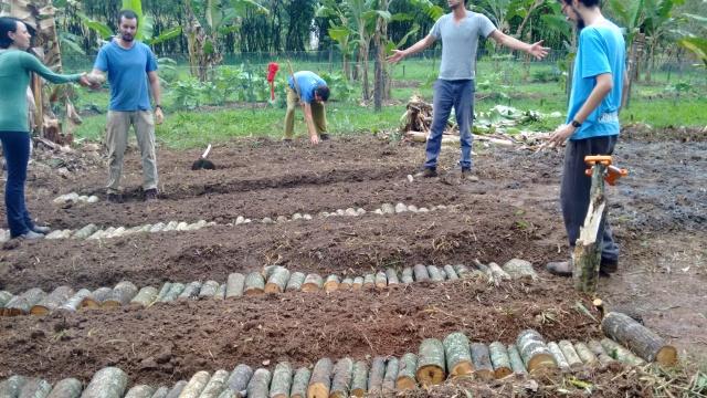 Nos sistemas agroflorestais a madeira é utilizada coo cobertura e proteção do solo